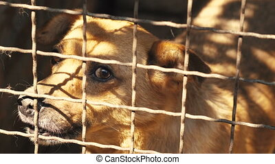 Angry Dog Behind Bars - Dog Behind Metal wire fence or cage