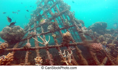 underwater landscape of the tropical sea, fish and corals of...