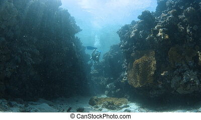 Coral reef and sunrays with scuba diver - A wide shot of a...