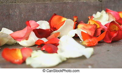 Red, white rose petals scattered on a marble tile - Wedding...