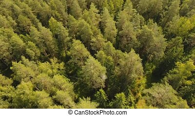 Flight over the green forest. - Aerial view Green forest,...