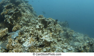 Large  chuck of coral reef underwater