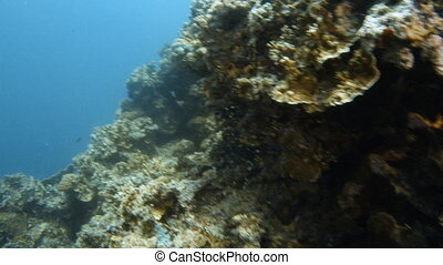 A large chuck of coral reef