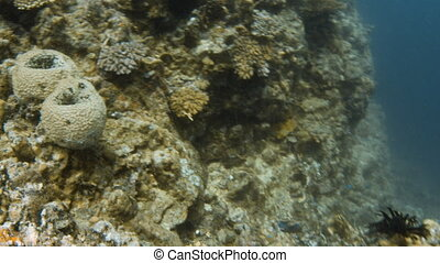 Scuba diver under water and coral reef