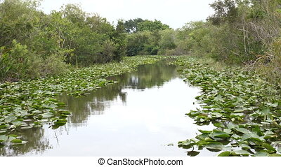 Small canal in the wetlands in Everglades National Park -...