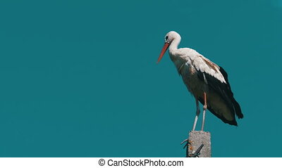 Stork Sitting on a Pillar High Voltage Power Lines on Blue...