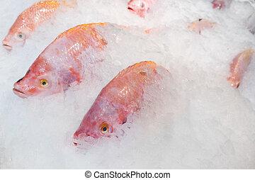close-up, tilapia, peixe, balde, gelo, fresco, vermelho
