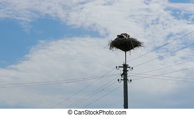 Storks Sitting in a Nest on a Pillar High Voltage Power...