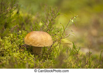 foraging bacground with edible mushrooms - foraging...