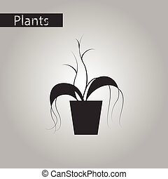 black and white style icon plant in a pot