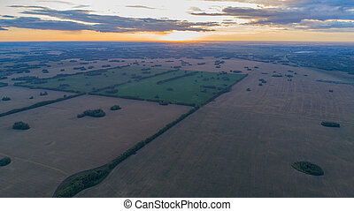 Wheat fields. Beautiful scenery from a height in sunset time. Photos from the height