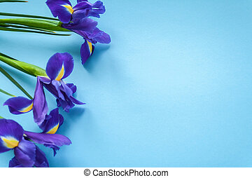 Spring flower frame made from iris. Flat lay - Bouquet of...