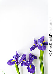 Spring flower frame made from iris - Bouquet of violet...