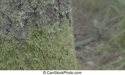 Large tree stump in summer forest. Mossy undergrowth in mountain forest. Mossy stump in old-growth forest