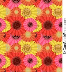 Seamless pattern colorful gerbera flowers, vector