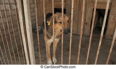 Dog in the kennel - Dog Behind Metal wire fence or cage