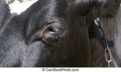 Eye Cows and a Fly Crawls - Eye cows and a fly crawls....