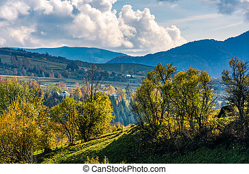 orchard on a hillside in beautiful countryside - apple...