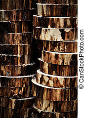 sawn wood in the form of wheels - background or texture sawn...
