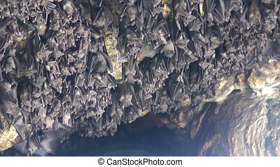 Mouse Bats on the cave arch in Pura Goa Lawah (bat cave...