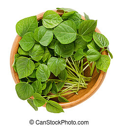 Adzuki bean microgreens in wooden bowl. Cotyledons of Vigna...