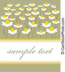 chamomile - postcard with a picture of chamomile field