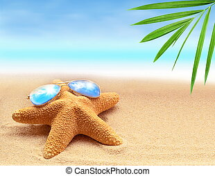 starfish on the summer beach with sand