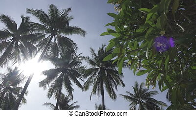 Panoramic view from below of tops of palm trees against the...
