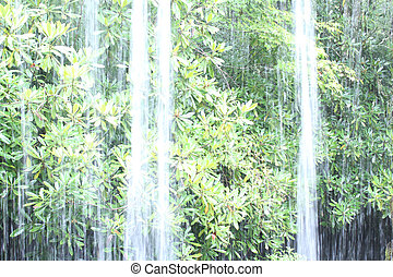 Bright Summer Day Tropical Woods with Natural Freshwater...
