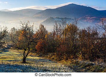 apple orchard in mountains at autumn sunrise. trees with red...
