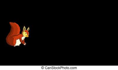Red Squirrel Runs. Alpha - Cute Eurasian Red Squirrel Runs....