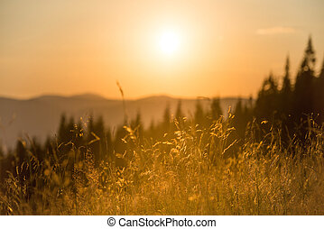 Dry grass on a field at sunset in the mountainst with big...