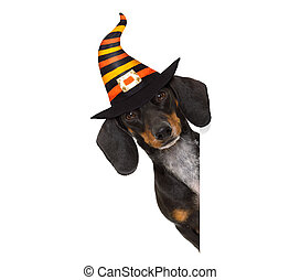 halloween ghost dog trick or treat - halloween devil sausage...