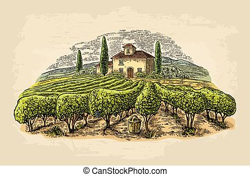 Rural landscape with villa, vineyard fields and hills....