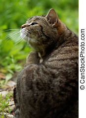 Cute cat outdoors - Cute cat sitting on the grass outdoors