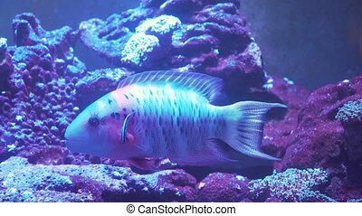 Coral reef and tropical fish. - Fish and coral reef....