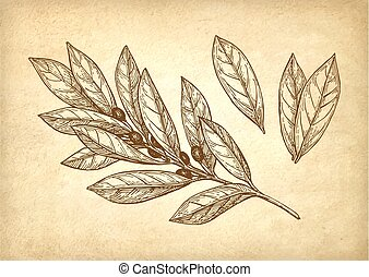 Bay leaves set.