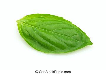 Leaf of basil - Fresh leaf of basil