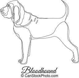 Bloodhound dog outline vector illustration