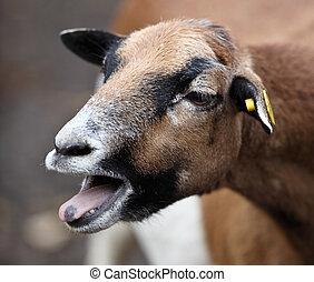 Goat - bleating goat
