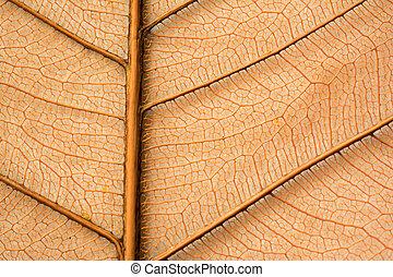 Dried orange leaf sceleton texture. Nature background