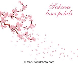 Branches with pink flowers and cherry buds. Sakura inscription. Petals flying in the wind. isolated on white background. illustration