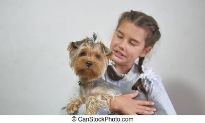 girl and a dog. teen girl holding a pet dog yorkshire...