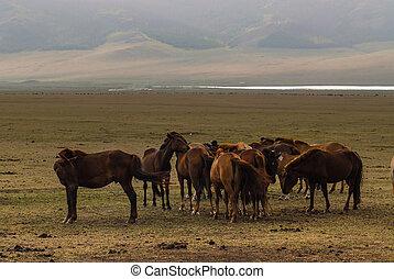Horse in the desert of Mongolia