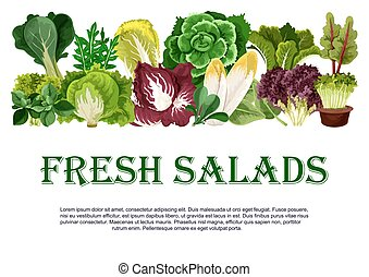 Vector poster of fresh salads leafy vegetables - Salads and...