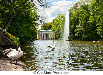 Beautiful swans on the lake in Sofiyivsky Park in Uman,...