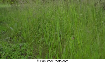 Crawling in the grass - Grassy garden from a dog's...