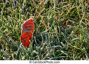 reddish leaf on ground in frosted green grass. beautiful...