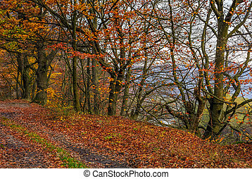 dirt road in forest with reddish foliage - lovely autumnal...