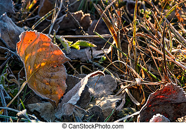 reddish leafs on ground in frosted grass. beautiful autumnal...